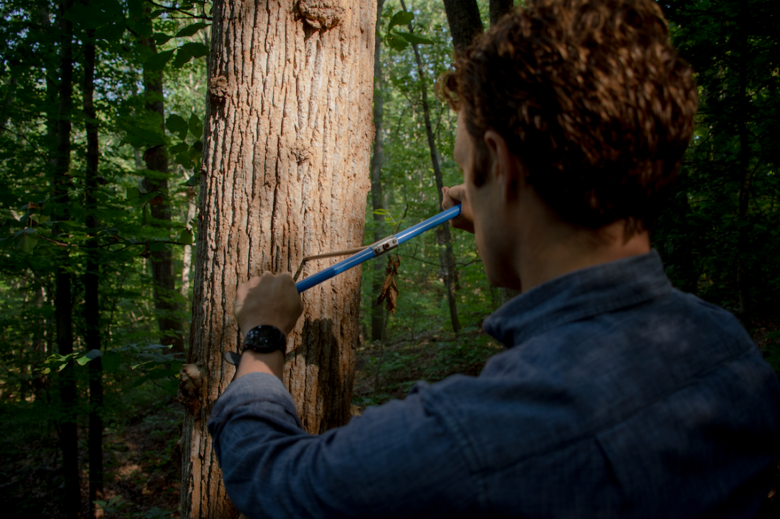 Tree researcher